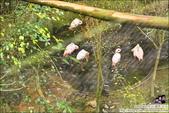 南投鳳凰谷鳥園生態園區:DSC_7980.JPG