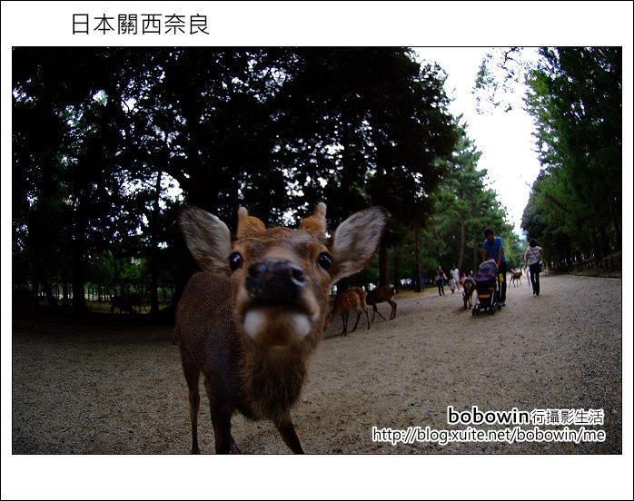 日本關西京都之旅Day5 part1 東福寺 奈良公園 春日大社:DSCF9538.JPG
