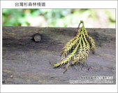 2011.05.14台灣杉森林棧道 文史館 天主堂:DSC_8334.JPG
