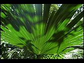 20080207_基隆紅淡山:DSC_7358.JPG