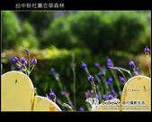 [ 台中 ] 新社薰衣草森林--薰衣草節:DSCF6487.JPG