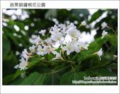 2012.04.29 苗栗桐花公園花況:DSC_1793.JPG