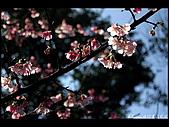 20080207_基隆紅淡山:DSC_7387.JPG