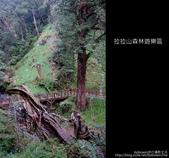 [ 北橫 ] 桃園復興鄉拉拉山森林遊樂區:DSCF7903.JPG