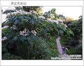 2012.05.06 汐止大尖山:DSC_2538.JPG
