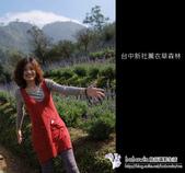[ 台中 ] 新社薰衣草森林--薰衣草節:DSCF6490.JPG