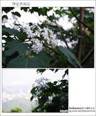 2012.05.06 汐止大尖山:DSC_2543.JPG