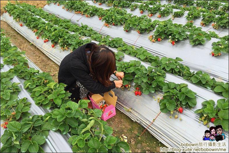 苗栗馬拉邦山採草莓:IMG_4232.JPG