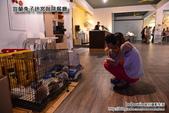 宜蘭兔子迷宮景觀餐廳:DSC_5248.JPG