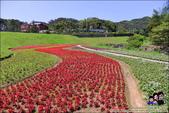 台北內湖大溝溪公園:DSC_2239.JPG