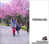 苗栗獅潭蓮臺山賞櫻:DSC_5113.JPG
