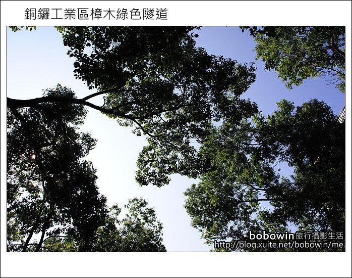 2011.10.23 銅鑼工業區樟木綠色隧道:DSC_9104.JPG