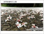 2012.04.29 苗栗桐花公園花況:DSC_1758.JPG