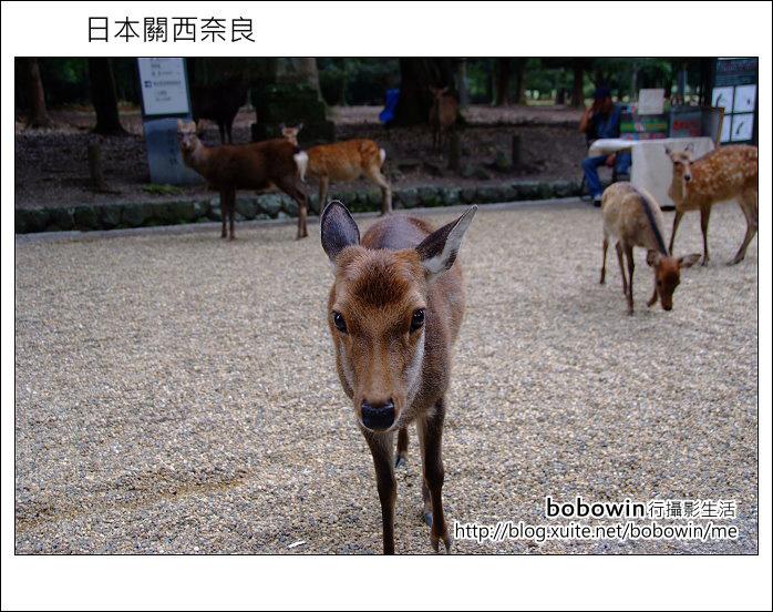 日本關西京都之旅Day5 part1 東福寺 奈良公園 春日大社:DSCF9587.JPG