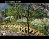 [ 台中 ] 新社薰衣草森林--薰衣草節:DSCF6619.JPG