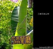 2009.07.04 三峽花岩山林:DSCF5846.JPG