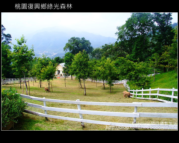 2009.08.15 綠光森林:DSCF6604.JPG