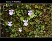 [ 北橫 ] 桃園復興鄉拉拉山森林遊樂區:DSCF7780.JPG