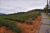 苗栗銅鑼茶廠:DSC_5236.JPG