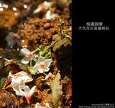 2009.04.30 大艽芎古道賞桐花:DSC_6111.JPG