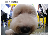 2011.09.03 基隆白舍愛琴海:DSC_2256.JPG