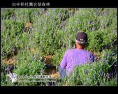 [ 台中 ] 新社薰衣草森林--薰衣草節:DSCF6621.JPG