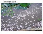 2012.04.29 苗栗桐花公園花況:DSC_1790.JPG