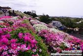 Okinawa Day3:DSC_0224.JPG