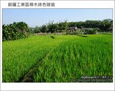 2011.10.23 銅鑼工業區樟木綠色隧道:DSC_9132.JPG