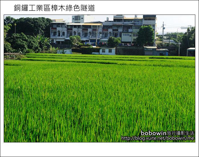 2011.10.23 銅鑼工業區樟木綠色隧道:DSC_9133.JPG