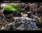 2009.04.30 大艽芎古道賞桐花:DSCF1993.JPG