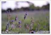 苗栗花露花卉農場:DSC_7165.JPG