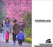 苗栗獅潭蓮臺山賞櫻:DSC_5105.JPG