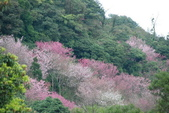 竹子湖:DSC_0091_調整大小_調整大小.JPG