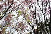 竹子湖:DSC_0088_調整大小_調整大小.JPG