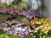 2011台北國際蘭展:IMG_6054_調整大小.JPG