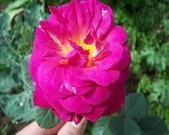 菜花園:調整大小102_9907.JPG
