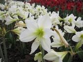 花博--春之花頌:IMG_5822.JPG