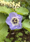 花球&草花:調整大小200903241137.jpg