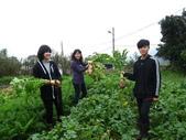 99-----菜花園:IMG_3875_調整大小