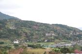 竹子湖:DSC_0093_調整大小_調整大小.JPG