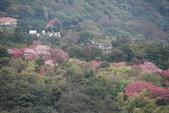 竹子湖:DSC_0037_調整大小_調整大小.JPG