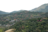 竹子湖:DSC_0040_調整大小_調整大小.JPG