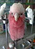 鳥:調整大小20081203516.jpg