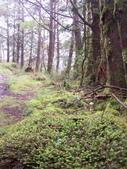 太平山翠峰湖山毛櫸步道:調整大小100_0739.JPG