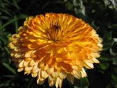 99-----菜花園:IMG_3137_調整大小