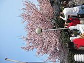2011天元宮櫻花:IMG_7110.JPG