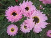 2011菜花園:IMG_7558_調整大小.JPG