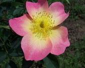 菜花園:調整大小102_9724.JPG