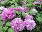 花博--春之花頌:IMG_7302_調整大小.JPG